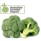 Picture of ORGANIC BROCCOLI PACK